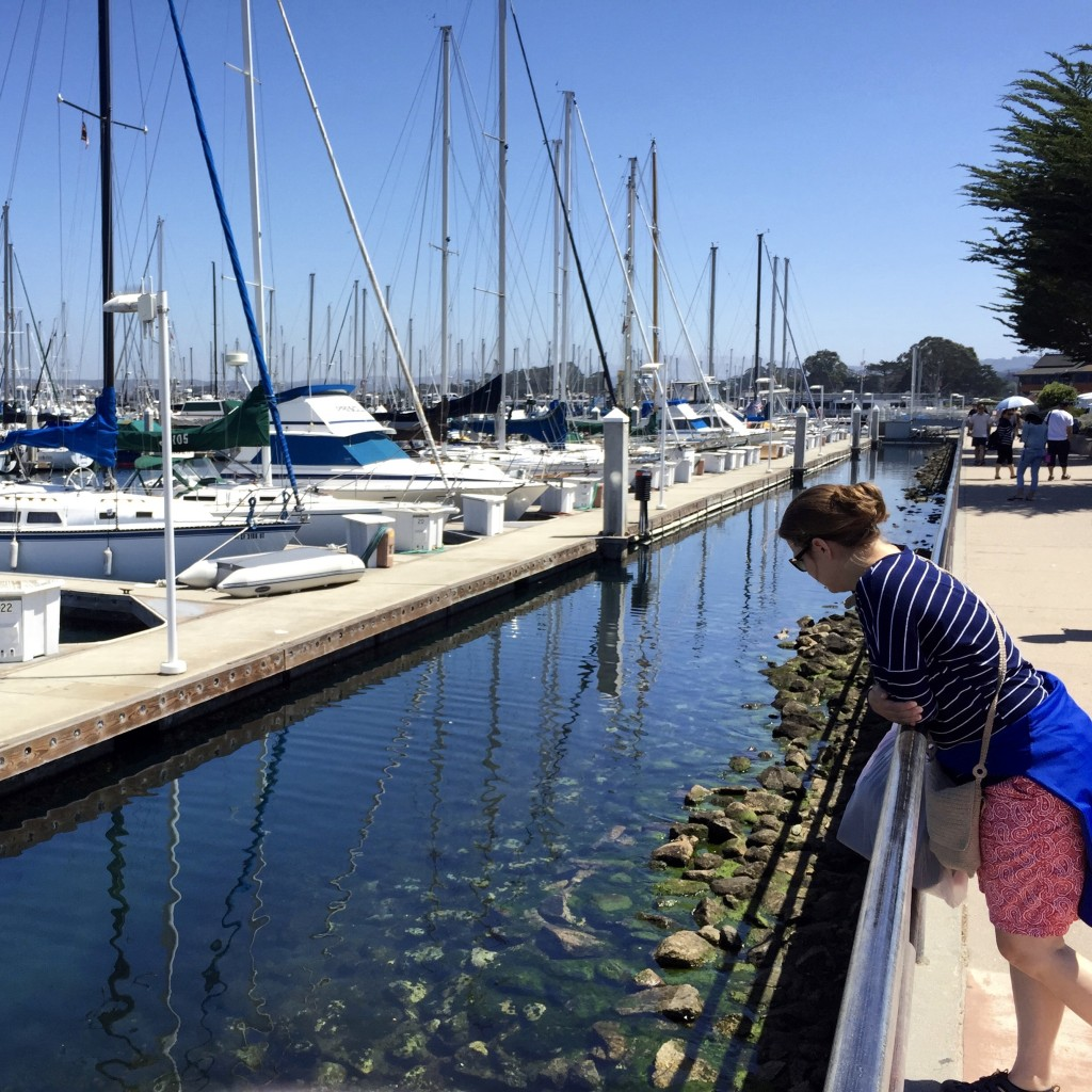 The Monterey Bay is a beautiful area and the harbor is full of splendid boats just waiting to sail.